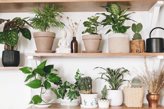 Plantes en pot design