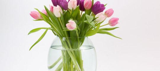 Conserver des fleurs coupées