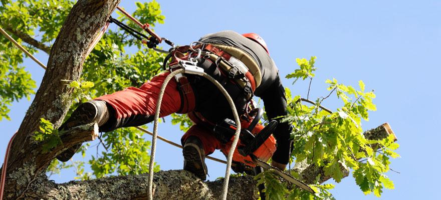 Élagage d'arbres en Seine et Marne